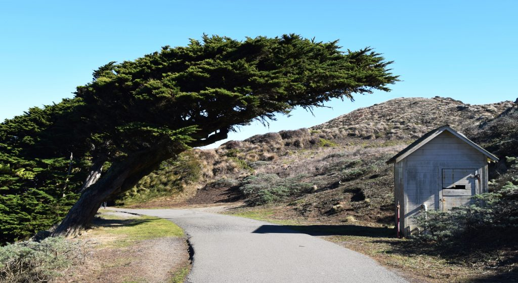 The Leaning Tree, Point Reyes, CA